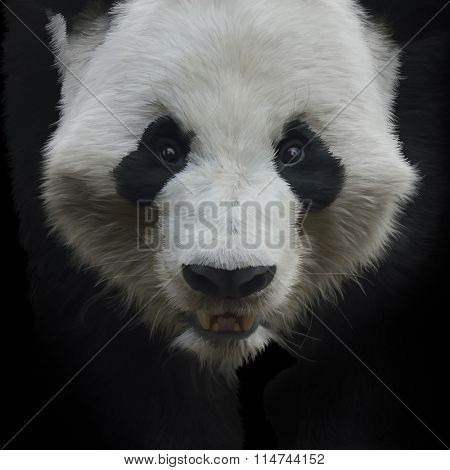Digital Painting of Giant Panda Bear on Black Background