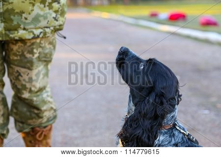 Border dog with a soldier