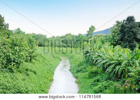 Water Canel To Farmland Field For Agricultural