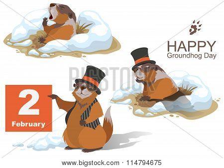 Happy Groundhog Day. Marmot holding February 2