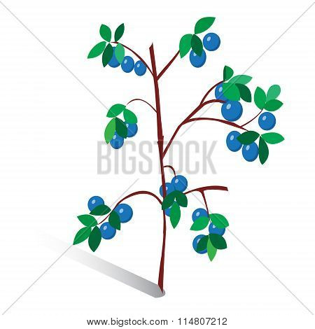 Vector Illustration, Drawn Sprig Of Blueberries. Isolated On White Background
