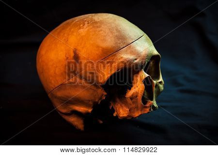 Sketch Tattoo. To Create Tattoos.human Skull For A Tattoo On A Black Background.halloween Background