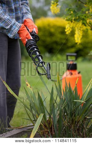 Protecting yucca plant from fungal disease or vermin with pressure sprayer, gardening concept