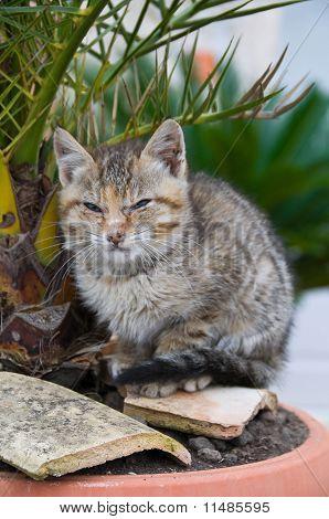 Dozy kitten on flowerpot.