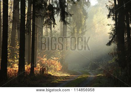 Country road through the autumnal forest