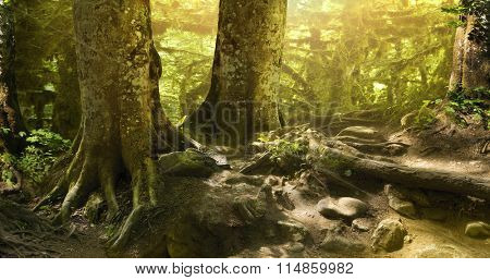 Great mysterious forest on a bright sunny day