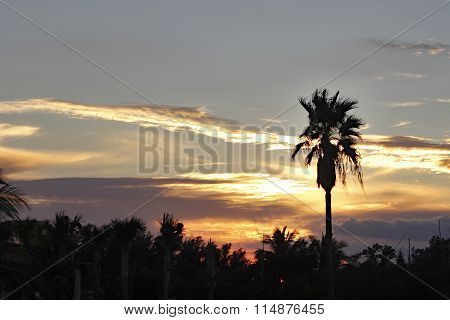 Palm Trees With Tropical Sunset