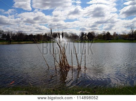 Cattails in a Small Lake