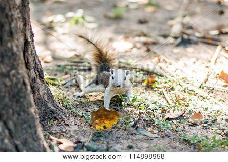 Squirrel On Autumn Forest