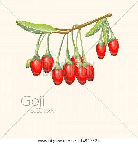 Illustration of goji berries. Fresh fruit background.