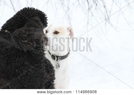 Two dogs getting aquainted on a winter day