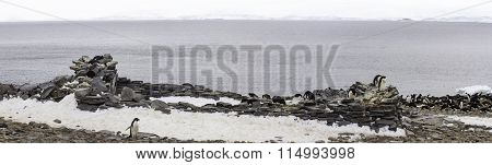 Historic Stone Hut With Penguin Nests, Paulet Island, Antarctica