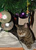 poland december cat resting under the christmas tree poster