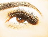 Brown Eye Makeup. Beautiful Eyes Make up detail, eyelash extension poster