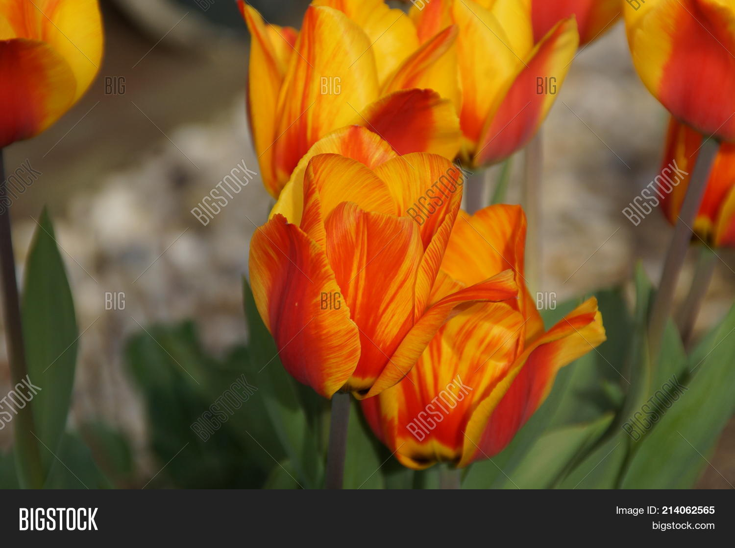 Beautiful Bright Colorful Flowers Flowers Healthy