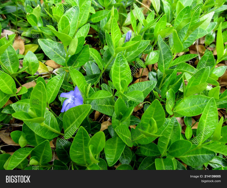 Bright Spring Image Photo Free Trial Bigstock