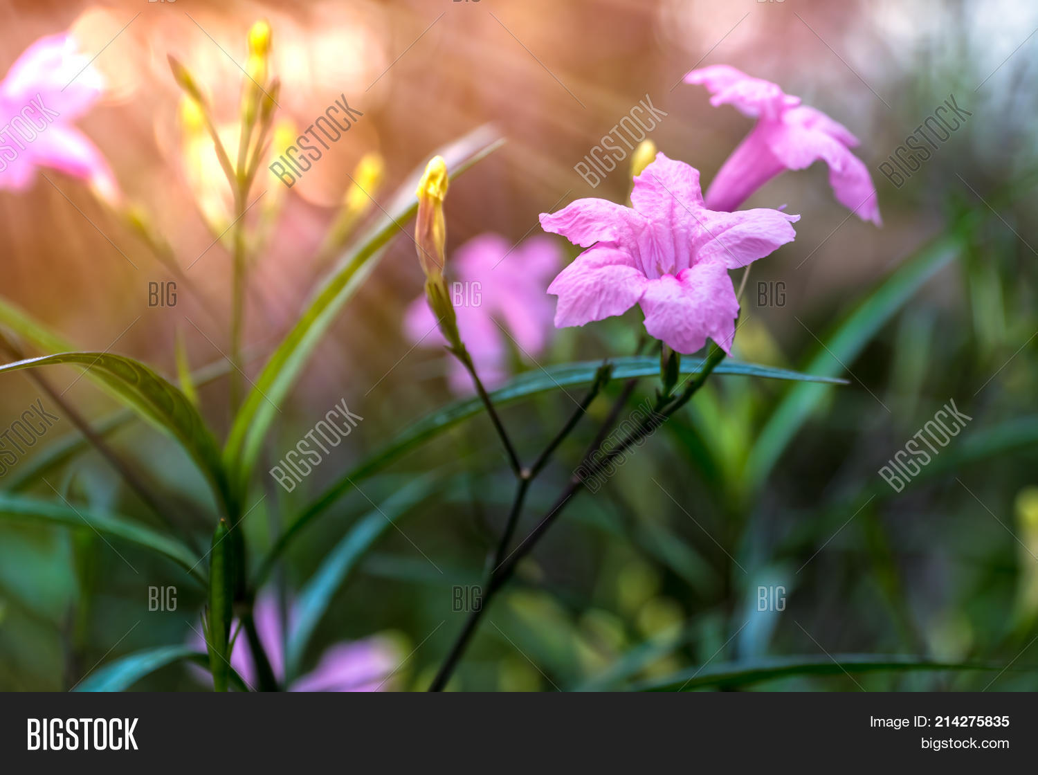 Little pink flowers bush beam image photo bigstock little pink flowers bush with beam sunshine on a dawn mightylinksfo