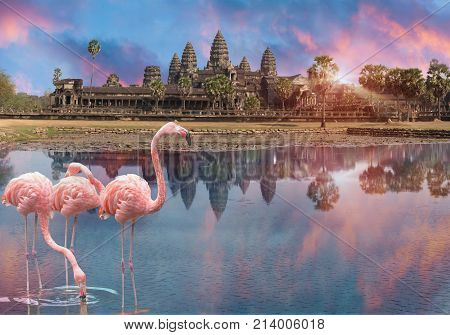 Three pink flamingo at sunset in the lake before Angkor Wat in Siem Reap Cambodia