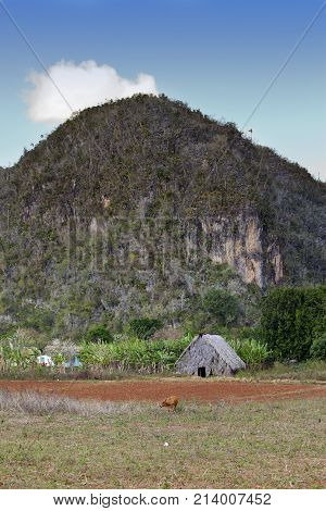Hut in the field. Cuba. Vinales Valley