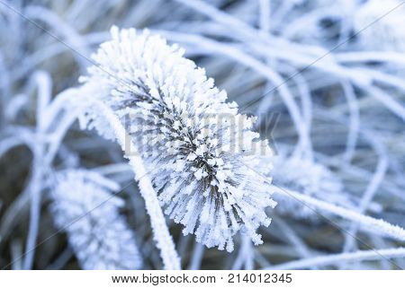 Image shows a frozen flower with hoarfrost