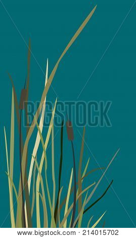 Silhouette of Reed Bush on blue. Vector Illustration