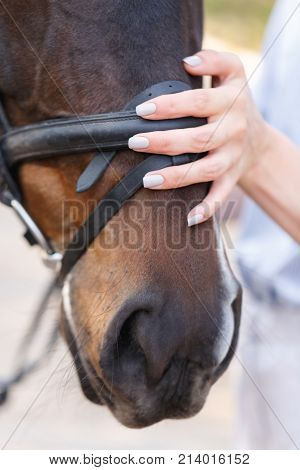 A woman's gentle hand strokes the dark horse's face. Close up. Outdoors.