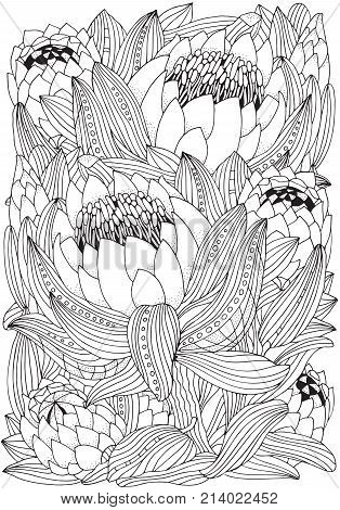 Coloring Book Page For Adult And Children. Protea Flower