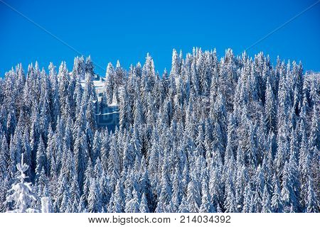 Forest covered in the snow on top of the mountain Jahorina in Bosnia and herzegovina