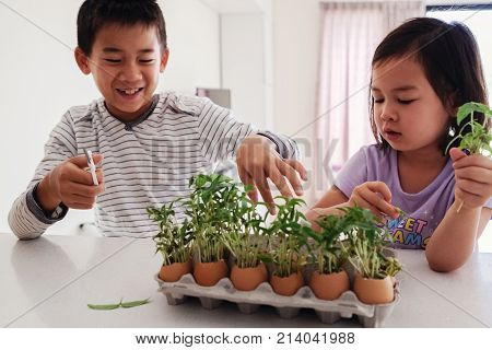 Mixed Asian Children With Seedling In Eggshells,, Eco Gardening,  Montessori, Education , Reuse Conc
