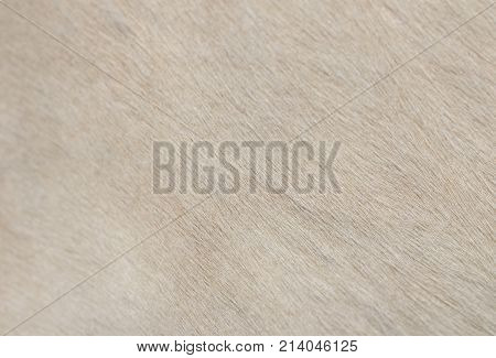 cow skin as background . Photo of an abstract texture