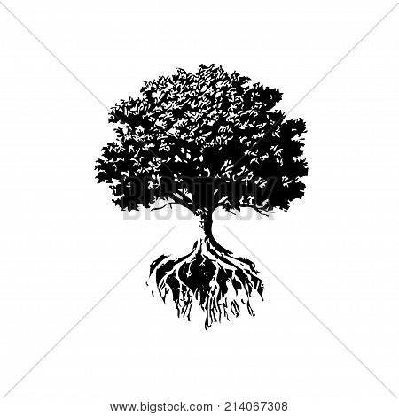 Trees And Roots silhouette, Oak And Olive Trees black and white color