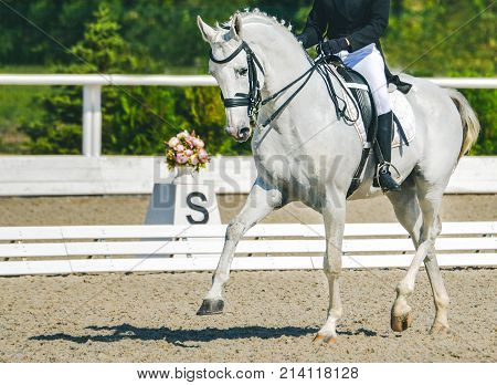 Young elegant rider woman and white horse. Advanced dressage test on equestrian competition. Professional female horse rider, equine theme. Saddle, bridle, boots and other details.