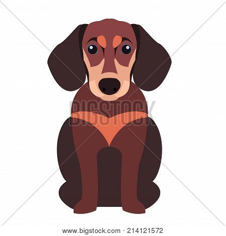 Cute funny dachshund dog sitting flat vector isolated on white background. Lovely purebred cartoon pet illustration for animal friends and companions concepts, pet shop ad