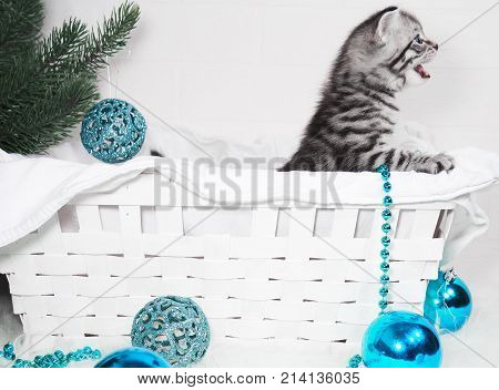 The kitten in the basket screams. Meow kitten congratulates with Christmas and a happy new yea