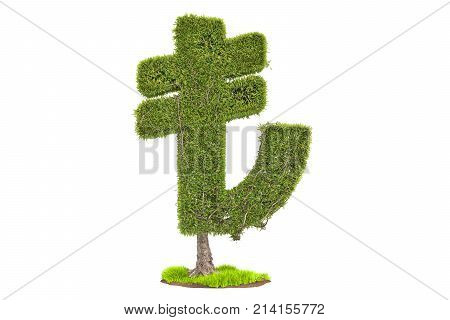 Money tree in the shape of lira symbol 3D rendering isolated on white background
