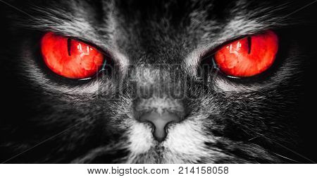 a cat with red devil eyes an evil terrible face from a nightmare looks directly into the soul camera