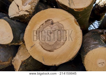 cut tree trunks