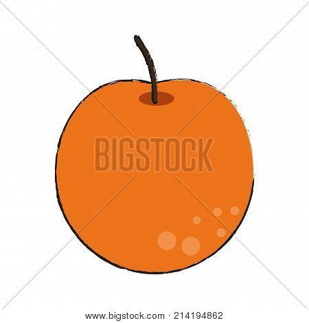 Orange Citric Fruit