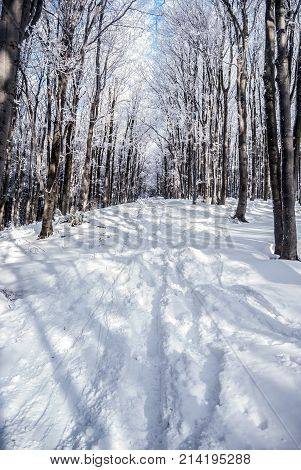 winter mountain forest with snow covered hiking trail and clear sky bellow Lysa hora hill in Moravskoslezske Beskydy mountains in Czech republic