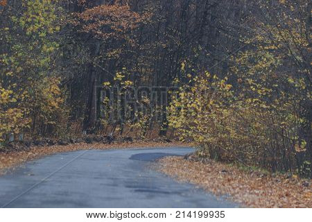 cars moving on a highway road in autumnal landscape.