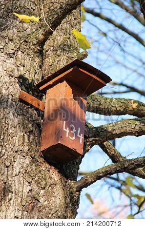 wooden nesting box on the trunk of the tree