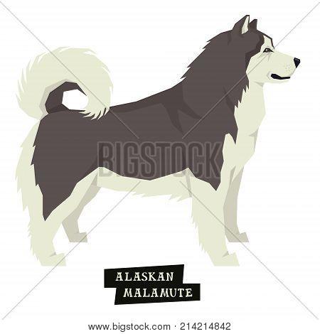 Dog collection Alaskan Malamute Geometric style Isolated object set