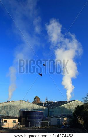 Smoke and birds  from factory against blue sky