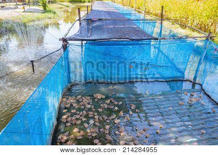 Raising frogs in cages.Thai livestock, animal husbandry