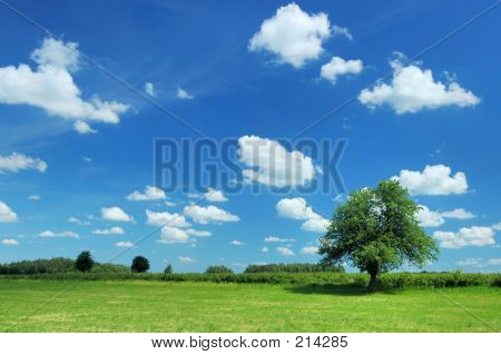 Zomer landschap