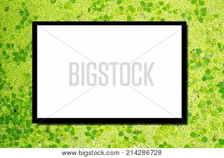 blank advertising billboard or wide screen television with nature green duckweed plants floats in water on water texture background copy space for text or media content commercial marketing concept