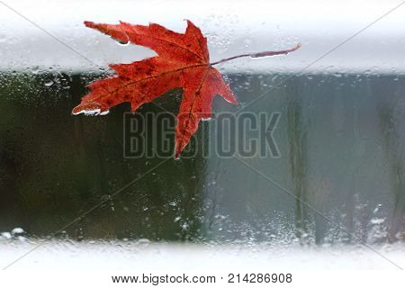 red maple leaf adhered to the wet with raindrops glass in the off-season , weather change outside the window