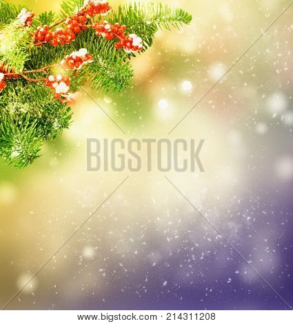 twig with red berries and evergreen fir tree twig over gray bokeh background with snow drops bokeh background, retro toned