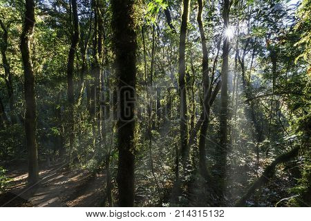 Kew Mae Pan Nature Trail in Doi Inthanon National park Chiang Mai Thailand