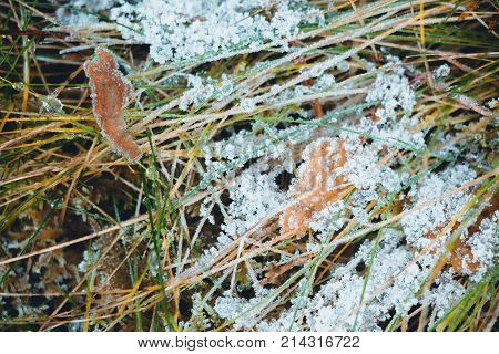 Dry leaves that fell from the tree to the grass, which began to turn yellow. All this is covered with hoar frost from a sharp cooling in late autumn. The hoar frost turned into a very beautiful form of the crucifixion.